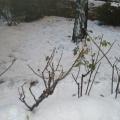 2010年的第一场雪(PARIS)