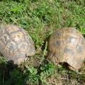 朋友后花园的龟