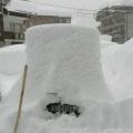 好大的雪哦