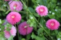Sseaux樱花