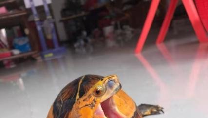 有喜欢乌龟的吗