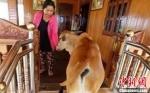 柬埔寨七旬老妪嫁给五月大小牛 称其系丈夫转世