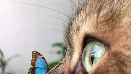 猫咪?喵喵喵