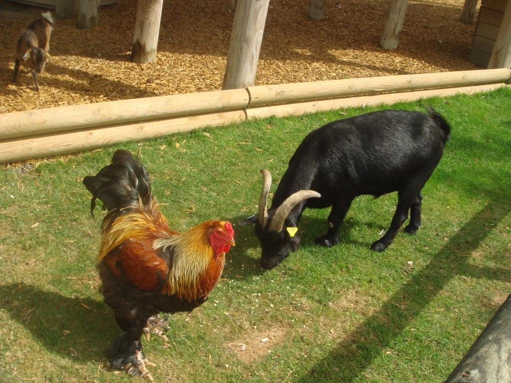 zoo beauval 动物园看熊猫咯