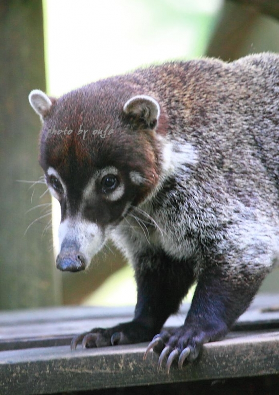 zooskool各种动物-动物园 zooparc de beauval 摄影交流