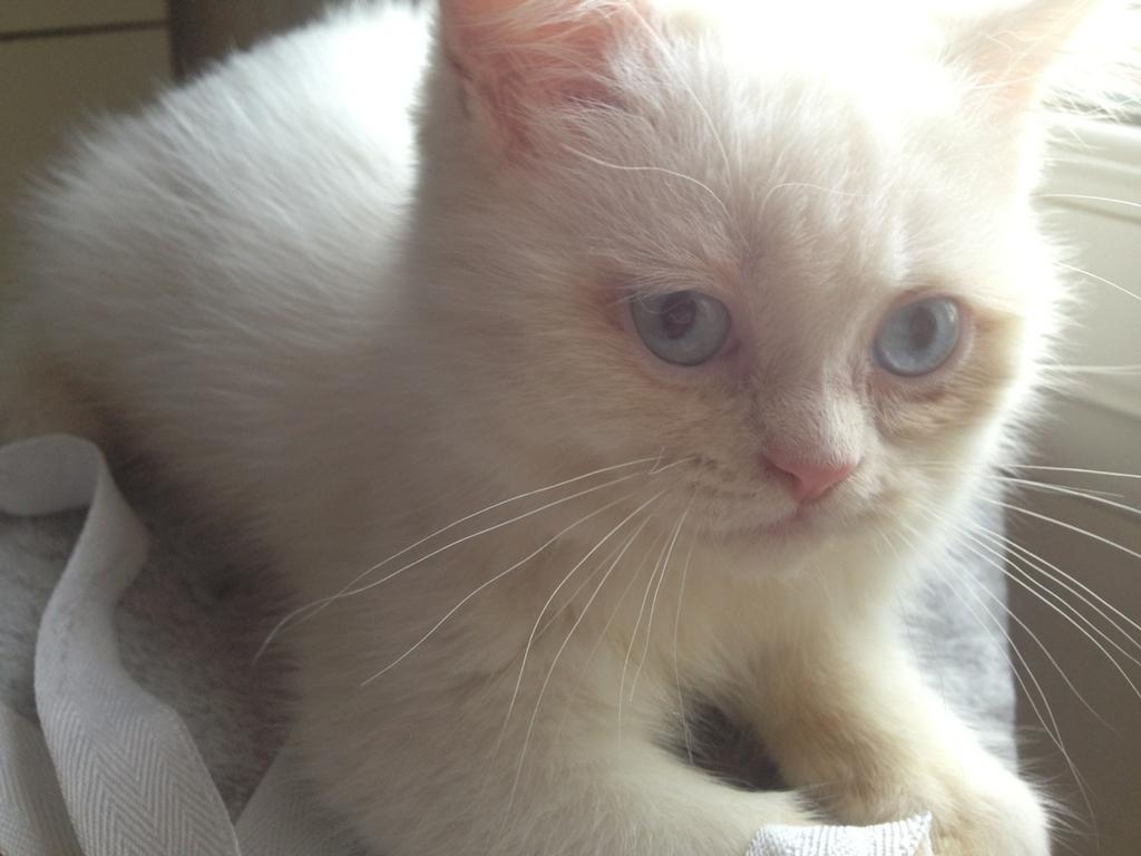 出卖白猫 - 宠物世界区