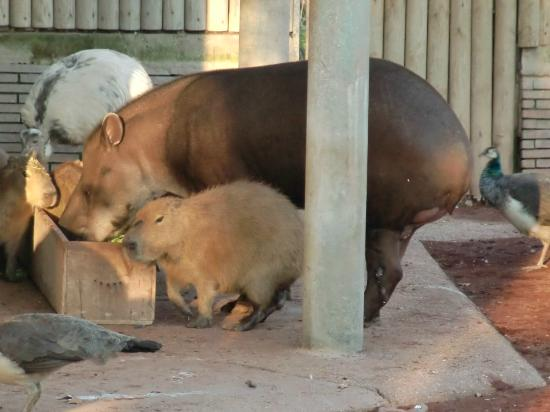 zooskool各种动物- 毕欧帕可野生动物园 意大利景点