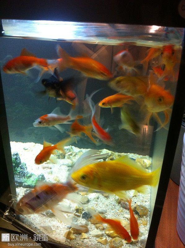 巴黎 清仓卖掉小金鱼以及鱼缸和其他渔具