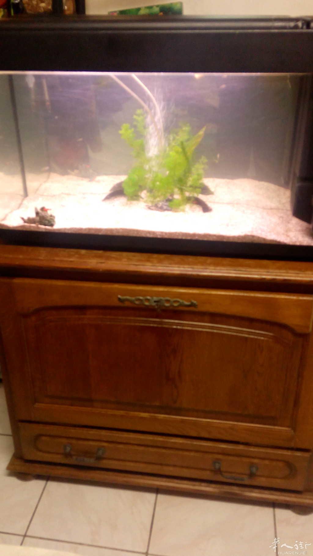卖鱼缸和实木柜子图片