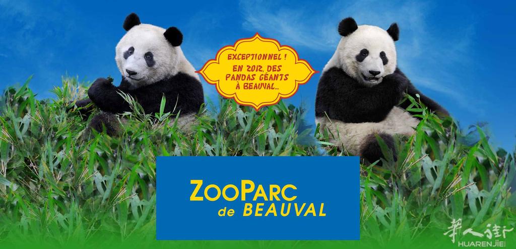 pandas-zooparc-beauval.jpg