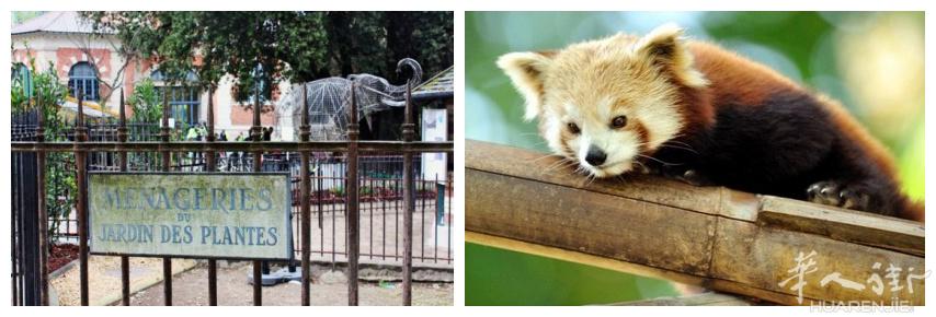 巴黎的动物园和水族馆大全