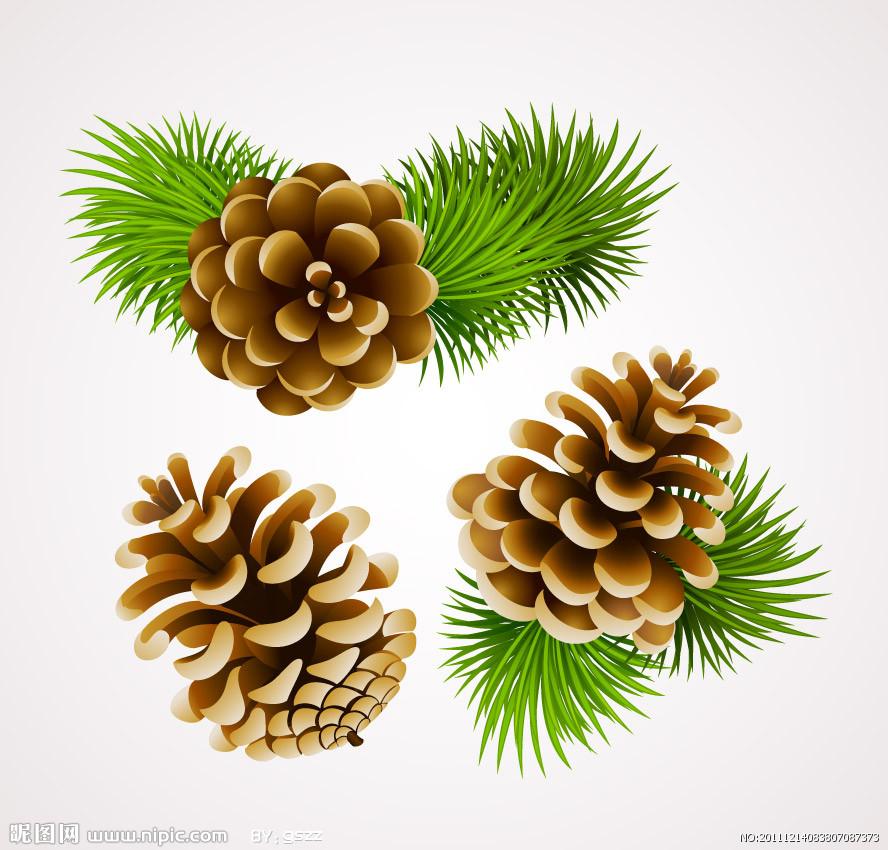 松子,别名有海松子,属于松树的种子