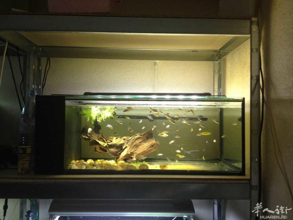 鱼缸都有内部侧过滤