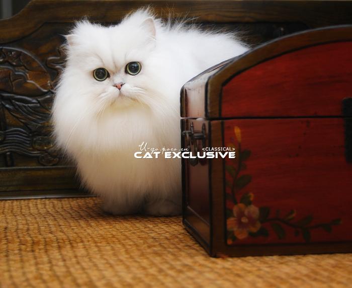 可爱的小猫简笔画可爱点全家的