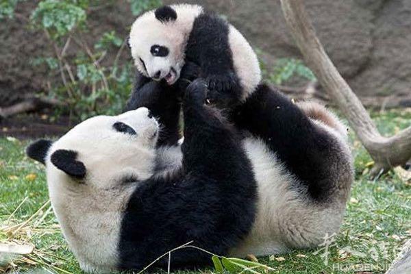 动物们的亲子照 - 宠物花草