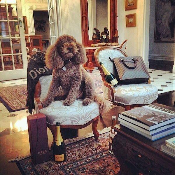 一种就是我是法国狗