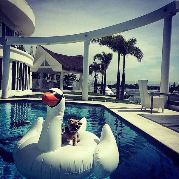 有钱的乘游艇,没钱做鸭子
