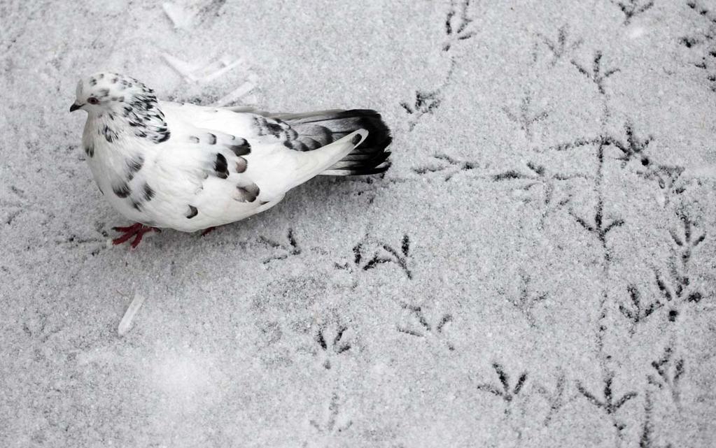 下雪天是最出作品的