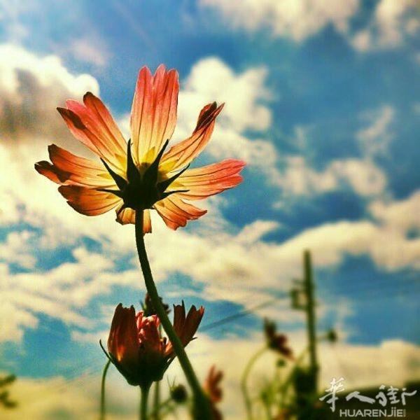 唯美森系风景植物摄影意境图片