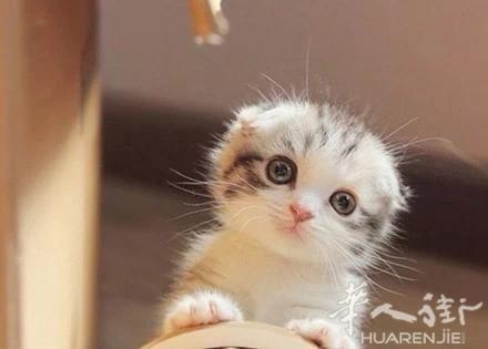 那些可爱的猫猫,么么哒!