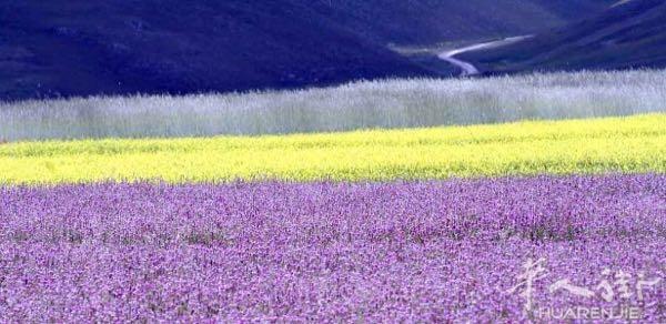 幸福大家庭鲜花风景图片