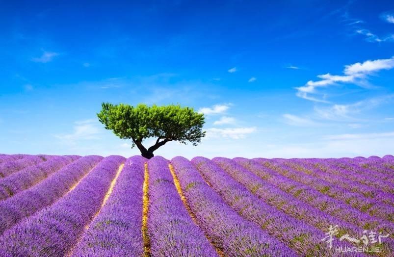 Provence-13a.jpg