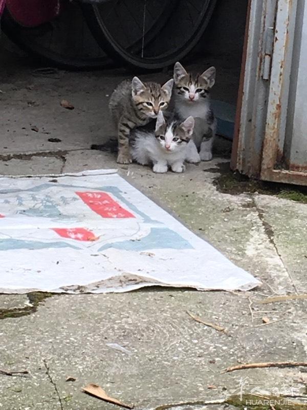 刚出生的小猫。再养一个月就可以送人咯