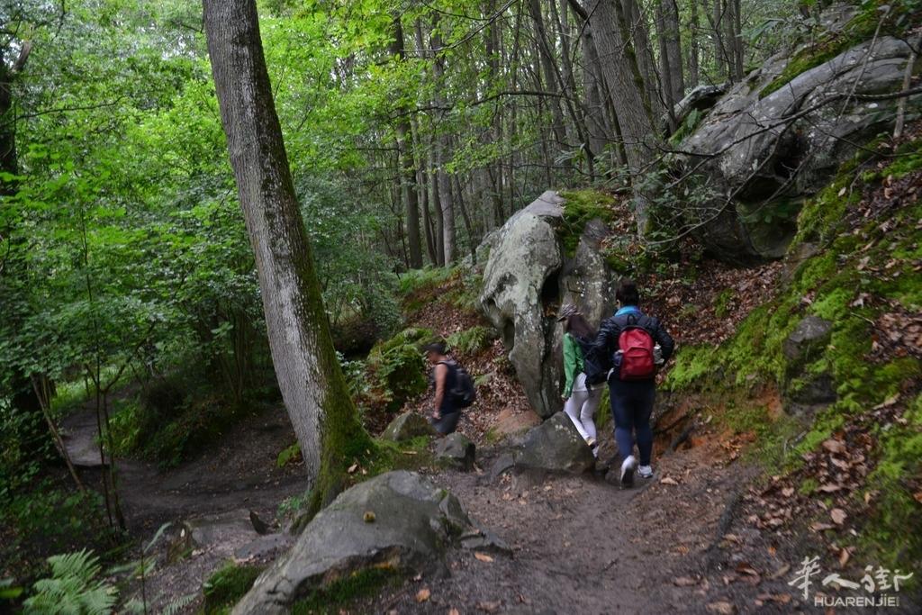 星期天chevreuse国家公园森林徒步