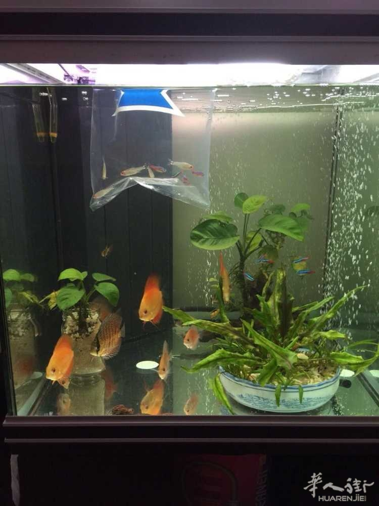 出售9成新鱼缸➕立式柜子,设备齐全