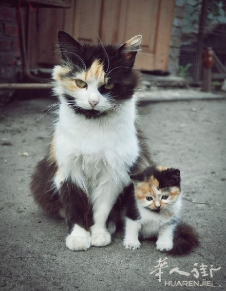 可爱的动物亲子照