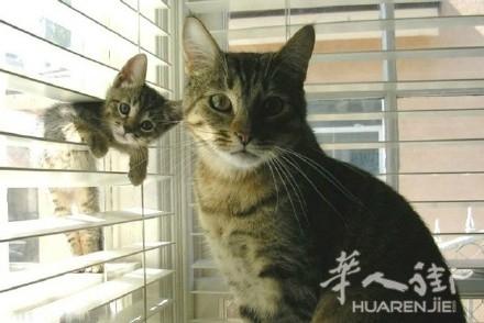论坛 69 华人大家庭 69 宠物花草 69 可爱的动物亲子照