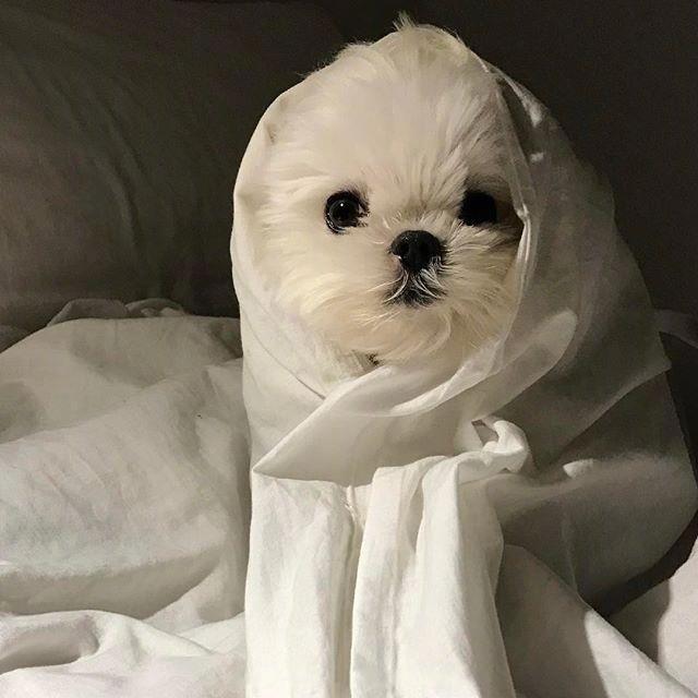 从早到晚只想裹着被子赖在床上的小可爱 !