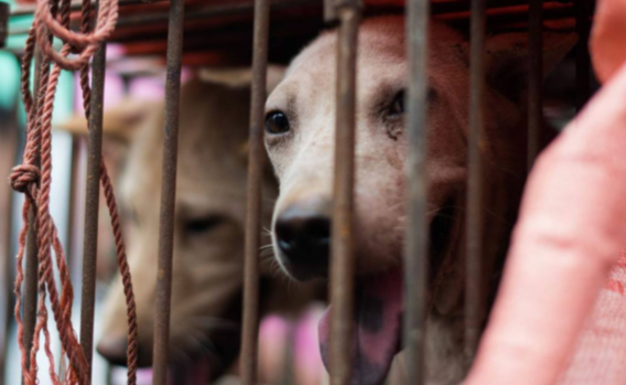 遭动物保护协会抗议,家乐福中国两超市下架狗肉