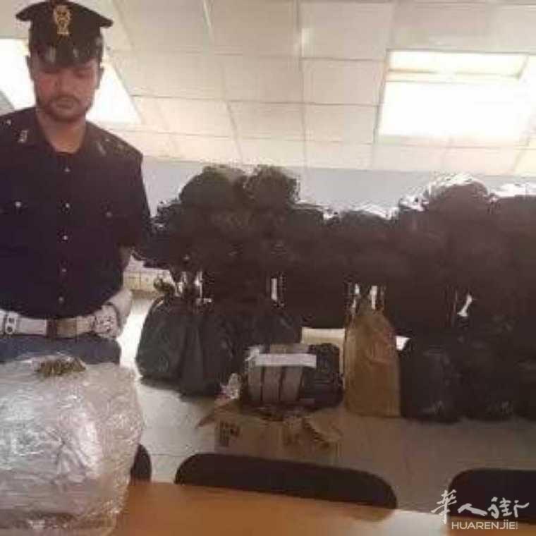 都灵查获250公斤大麻,价值200万欧!