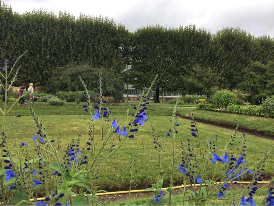 植物园奇花异草,我被惊艳到了