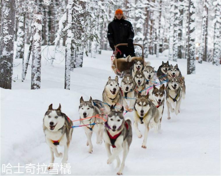 husky-safari-in-santa-claus-in-village-rovaniemi-lapland-finland-825x659.jpg