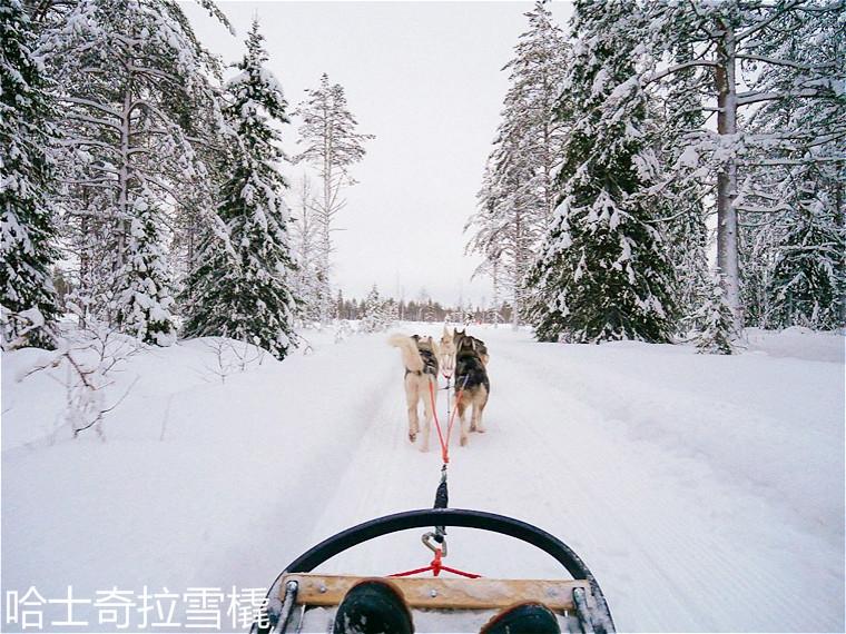 Oulu-husky-dogsled-finland-20.jpg