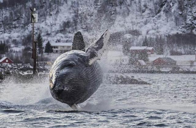 观鲸.jpg
