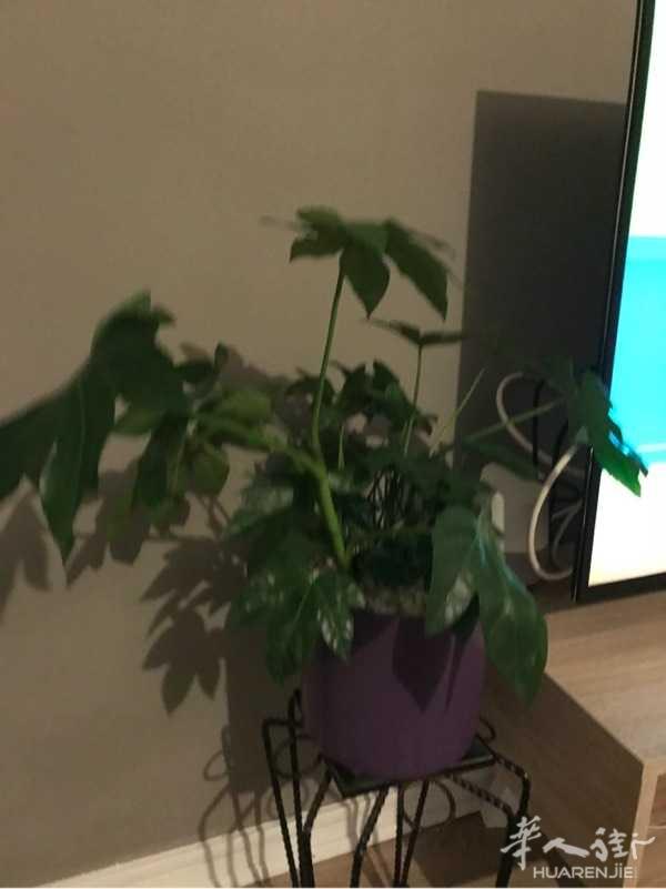 家里多了几盘绿色植物