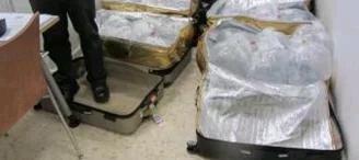 两名中国乘客欲携6箱鳗鱼幼苗登机