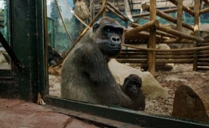 动物园.png