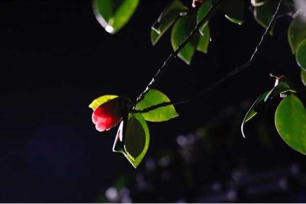 就让梦栖息在最深且亭亭玉立的月夜里。原创字珠儿,拍摄者