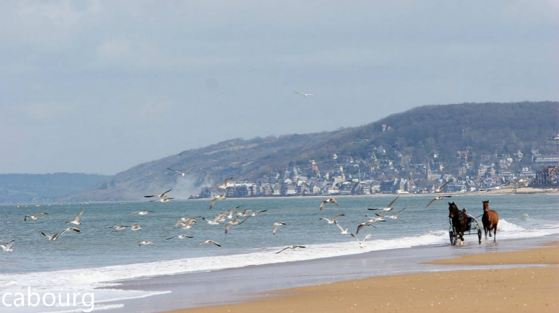 Achat-immobilier-a---Cabourg.jpg