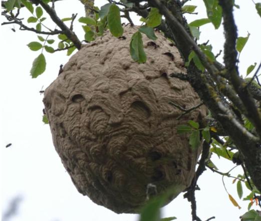 蜂巢.png