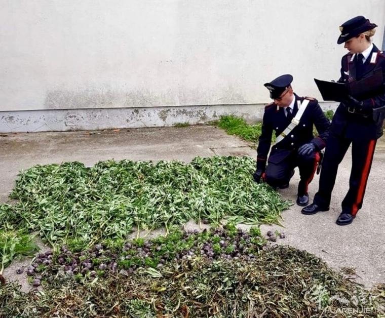 帕多瓦宪兵查获种植大麻场所, 53岁华人被捕