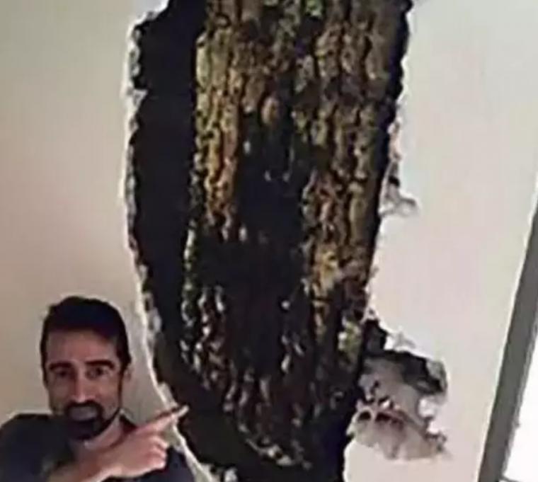 好可怕!西班牙夫妇自家墙壁内藏着8万只蜜蜂!