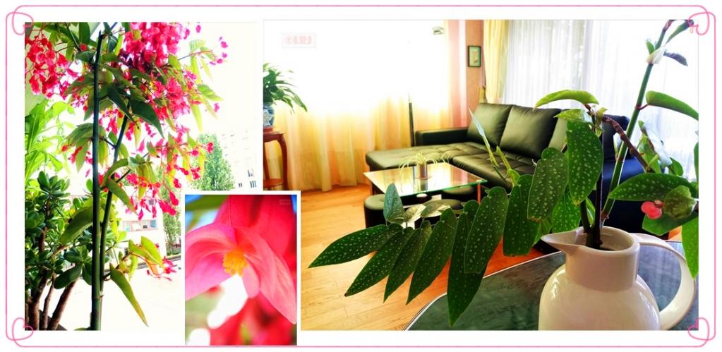 海棠花开.jpg