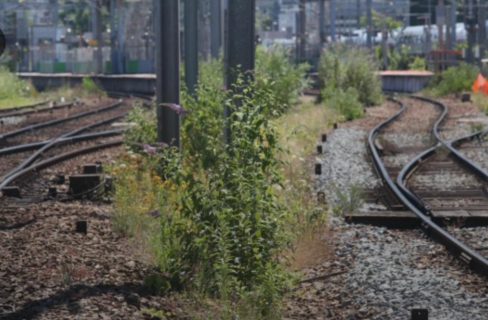 法国TER火车发生撞人事故:一死两伤