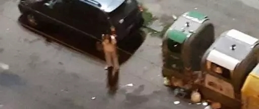 那不勒斯华人站街女伤风败俗严重扰民,惹毛了当地居民!