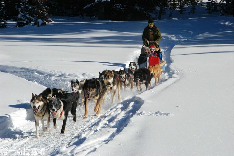 husky-safaris-finland.jpg